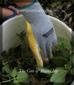 Core of Friendship 3