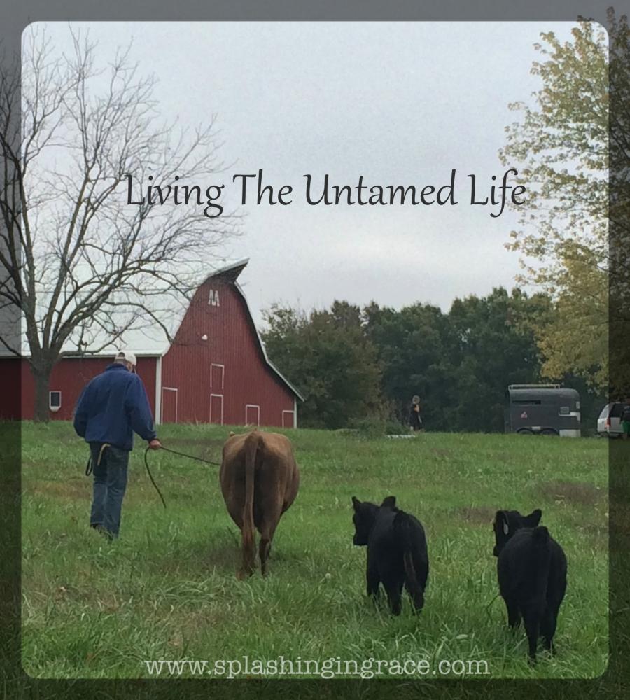 Blog Living The Untamed Life.jpg